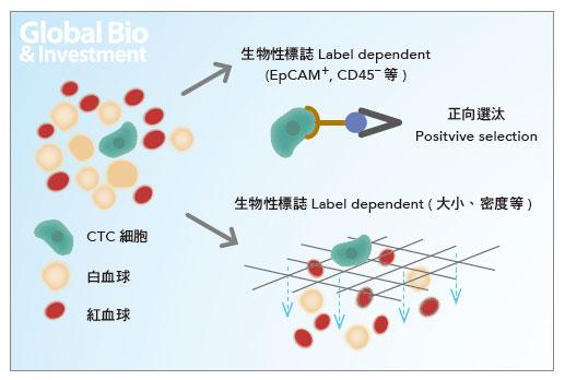 CTC篩檢可透過特定的濾膜,或對CTC本身之抗原抗體的識別等方式篩查。