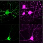 single-neurons