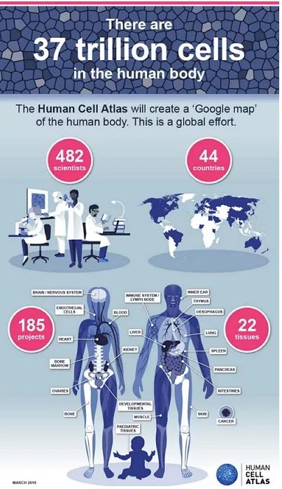 圖片取自Wellcome Sanger Institute, Genome Research Limited