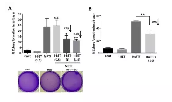 I-BET-762-762顯著抑制癌前細胞的生長(圖片來源:網路)