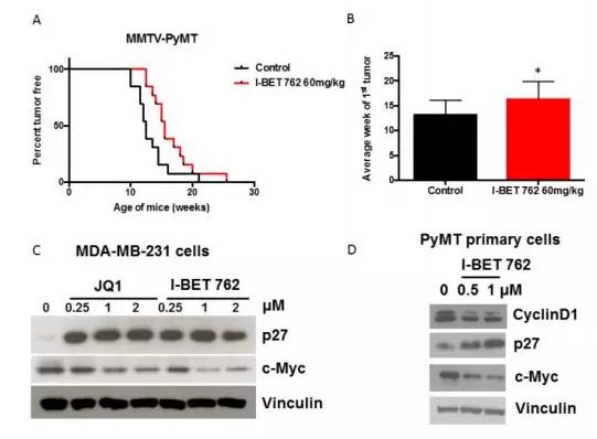I-BET-762-762延緩腫瘤發展(圖片來源:網路)