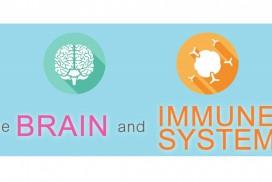 brain-immune-system-connection-fb