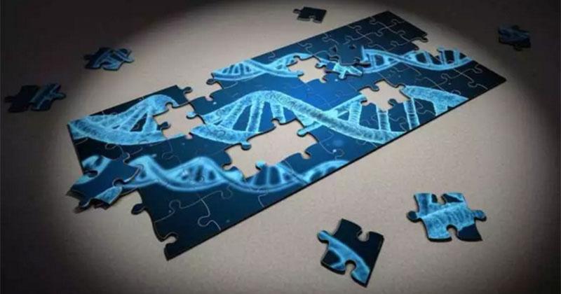 cell gene