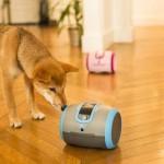 法國公司CamToy為寵物開發出機器玩伴,以緩解牠們的孤單,也改變主人生活,從此不管人在哪裡,都能和心愛寵物互動。目前,正製作第一個為狗而生的產品「蕾卡」。