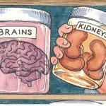 體外培養器官以不是難題 (圖片來源:網路)