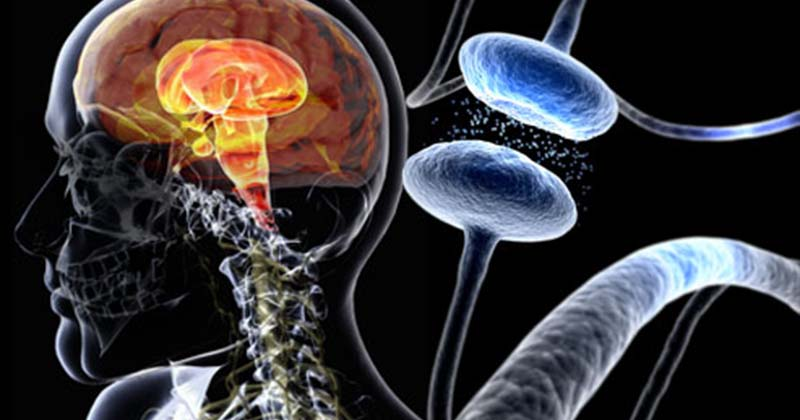 巴金森氏症新發現:神經元沒死,只是變成「殭屍細胞」。(圖片來源:網路)
