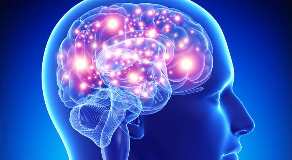 《Nature》神經過度興奮會短命?!哈佛團隊發現長壽關鍵蛋白質 (圖片來源:網路)