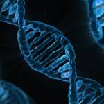 《Nucleic Acids Research》編碼蛋白質的基因數 可能實際比我們所知道的少20%。(圖片來源:Max pixel)