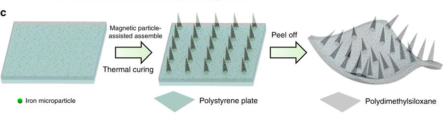 Millirobot使用聚二甲矽氧烷(PDMS)改進的磁粉輔助成型方法,使多足機器人形成錐形腳的結構,在凝固過程施加外部磁場,得到一個長度為17毫米,寬度為7毫米,厚度為150微米的機器人。(圖片來源:Nature)