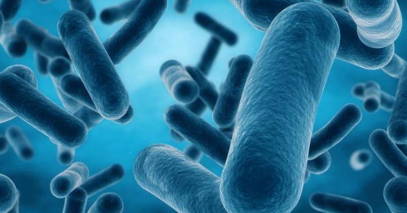《Nature》腸道菌群差異影響藥效  三分之二藥物被代謝!? (圖片來源: 網路)