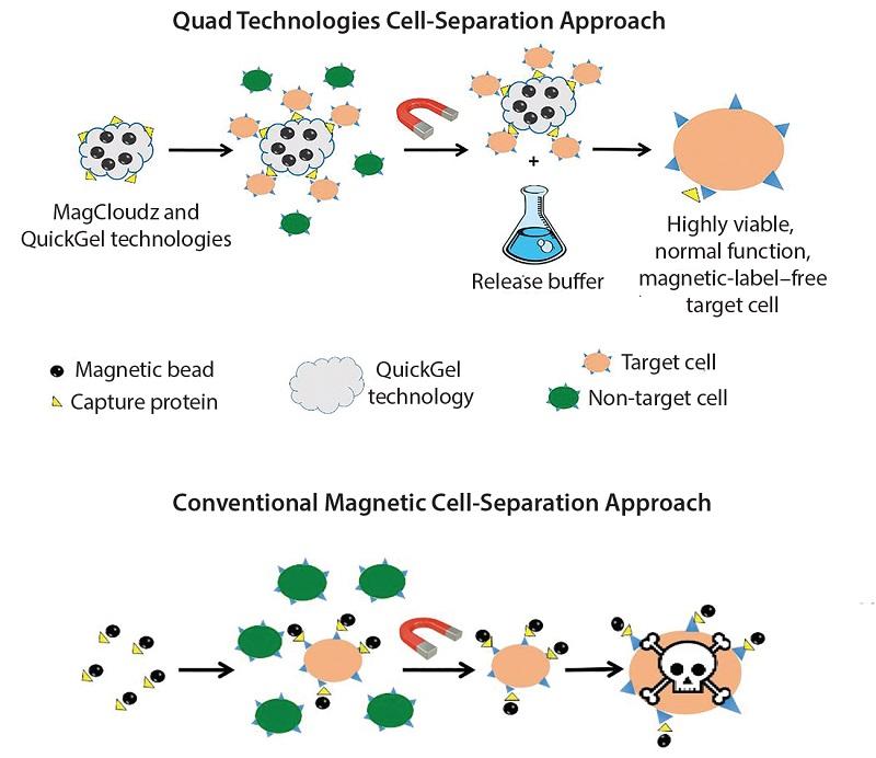 MagCloudz細胞分離,使用磁性粒子作為QuickGel技術的載體。(圖片來源:Quad Technologies)