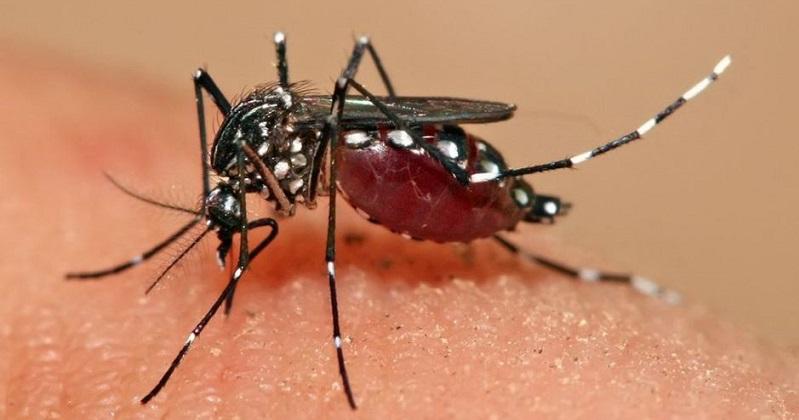《Cell》用減肥藥抑制蚊子食慾 期盼降低疾病傳播(圖片來源:網路)