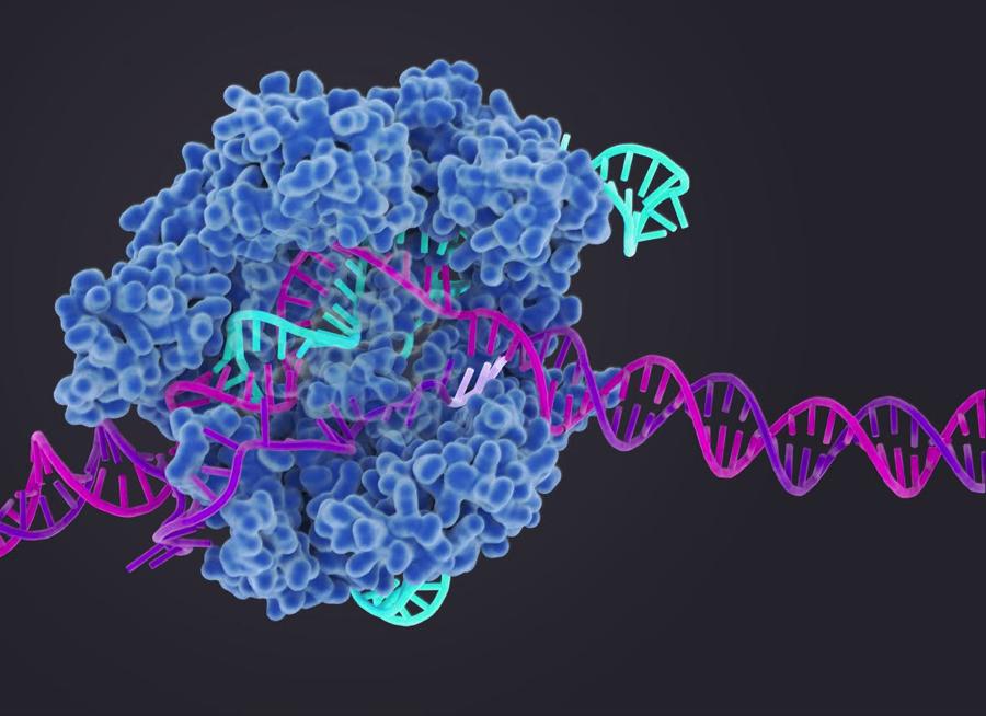 《Nature》劉如謙推出最新基因編輯術Prime editing 精確性更勝CRISPR-Cas9 (圖片來源: 網路)