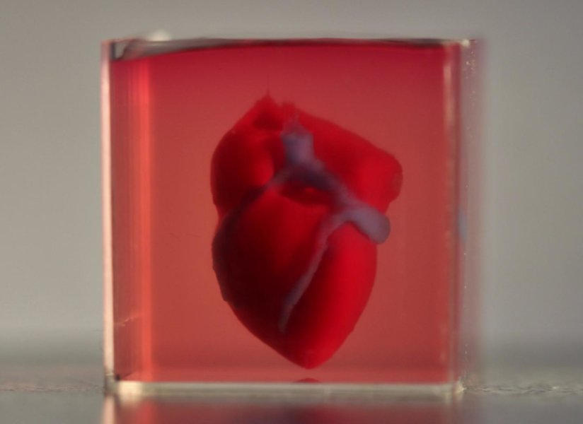 兔子心臟大小的3D列印心臟 (圖片來源: sciencedaily)