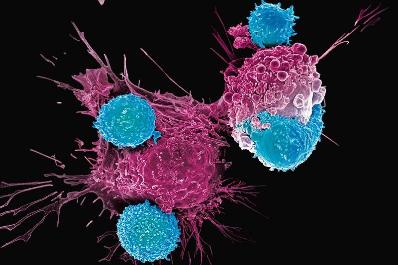 《Science》子刊封面:「溶瘤病毒+CAR-T」 創新療法攻破實體瘤 (圖片來源:網路)