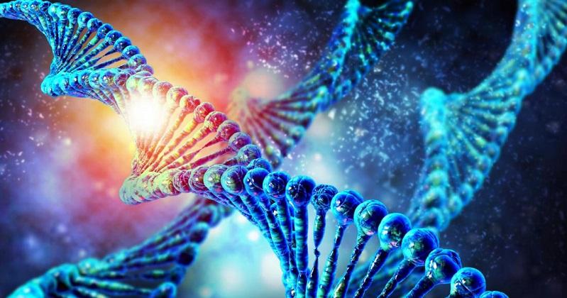 《Nature》新型基因編輯工具 跳躍基因可插入長達10,000 個鹼基對(圖片來源:網路)