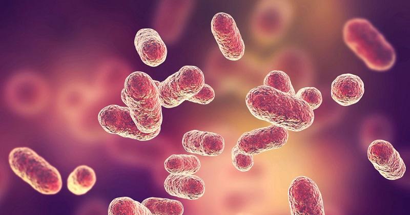 阻斷牙齦細菌 預防阿茲海默症 Cortexyme擬登陸那斯達克 (圖片來源:網路)