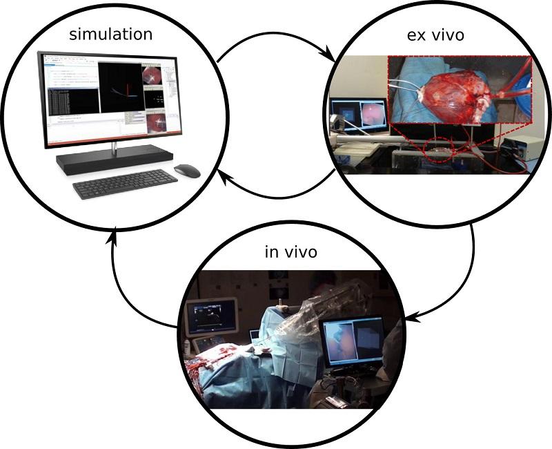 首次導入無人自駕車概念, AI導管機器人找到心臟瓣膜滲漏。(圖片來源:Science Robotics)