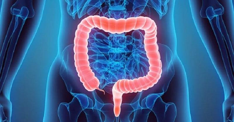 《Journal of Cell Biology》致癌基因再發現! 「轉運蛋白」有望成大腸癌新標靶 (圖片來源:網路)