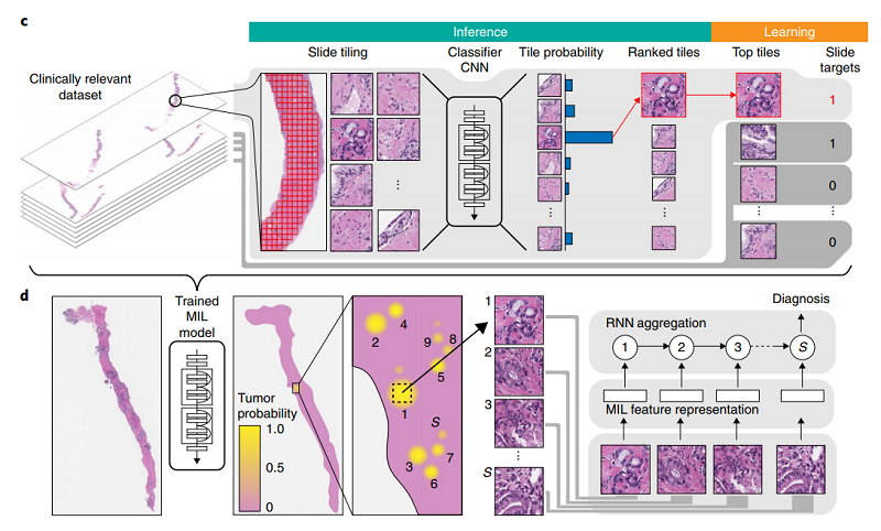 《Nature》首個臨床級病理AI問世 4萬張切片辨識準確率達98%。(圖片來源:Nature)