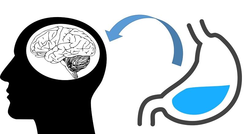 「飢餓激素」有助於增強記憶力!?(圖片來源:網路)