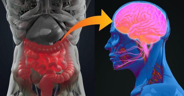 《Nature》巴金森氏症源於腸道感染 誘發自體免疫反應造成!?(圖片來源:網路)