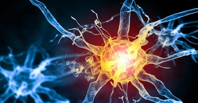 《Science》感官器官新發現!?許旺細胞構成 可感知疼痛(圖片來源:網路)