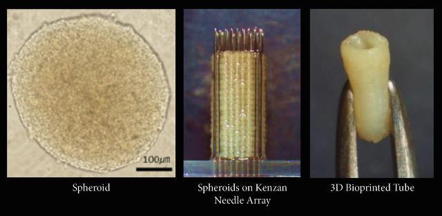 佐賀大學 開發全人類細胞血管 最快今年進行人體試驗。(圖片來源:3D Print.com)
