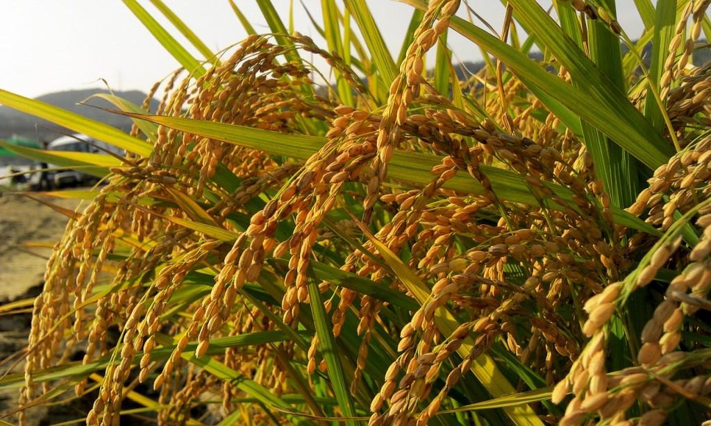 國產機能性農產品吸睛 10月18、19日農試所亮點成果公開 (圖片來源:網路)