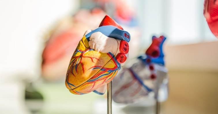 大阪大學完成全球首例iPSC心臟手術 (圖片來源:網路)