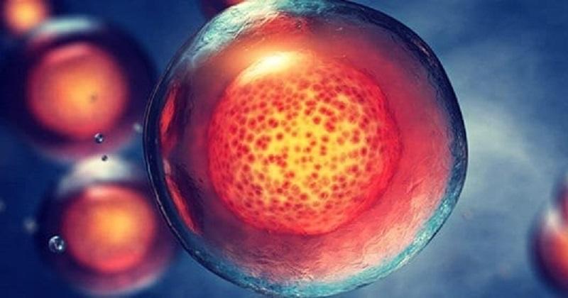 Mesoblast幹細胞療法Ryoncil緩解難治器官移植排斥展成效 (圖片來源:網路)