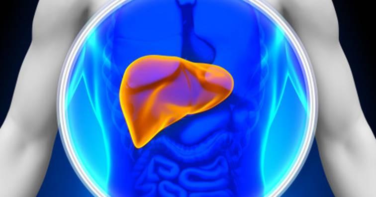 肝癌治療新發現!針對非癌細胞治療法可抑制腫瘤生長(圖片來源:網路)