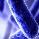 美國研究抗生素重新定位可用於對抗AB菌(圖片來源:網路)