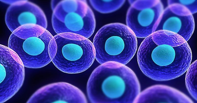 FDA委員會9:1支持卻遭拒批?! Mesoblast小兒GVHD細胞療法BLA申請失利、股價大跌44%(圖片取自網路)