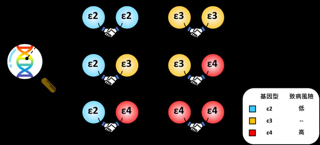 ApoE 型分辨圖